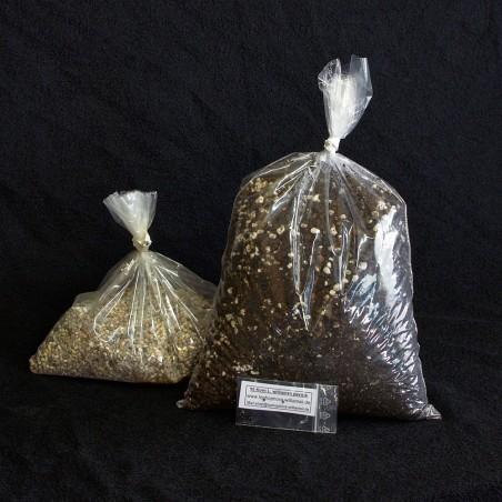 Lophophora williamsii Aussaat-Set, 50 Korn