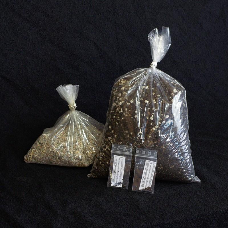 Lophophora Aussaat-Set, 200 Korn - optional mit Zimmergewächshaus