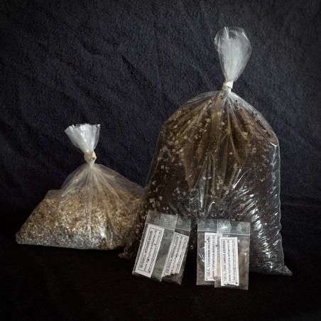 Lophophora-San Pedro Aussaat-Set, 400 Korn