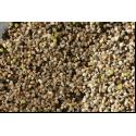 Lophophora williamsii Aussaat-Set, ab 30 Korn