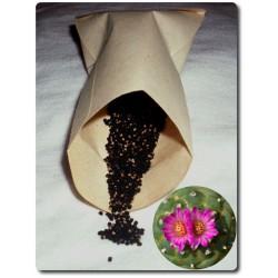 Lophophora jourdaniana ab 10 Korn