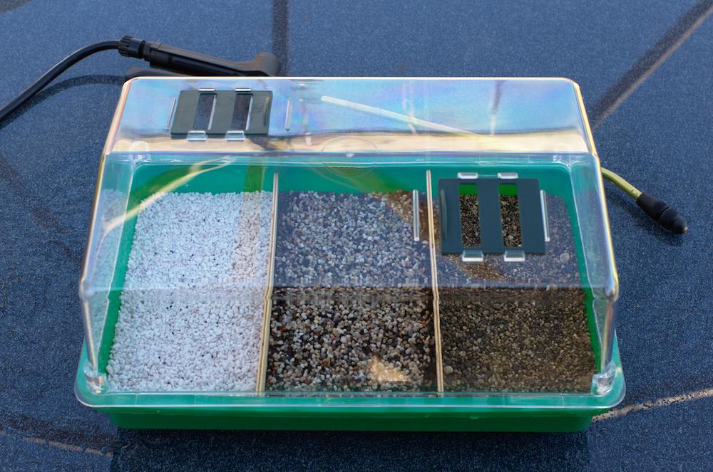 Beispielbild einer Peyote-Aussaat mit verschiedenen Substraten