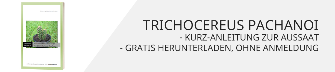 Trichocereus paranoi Anleitung zur Aussat